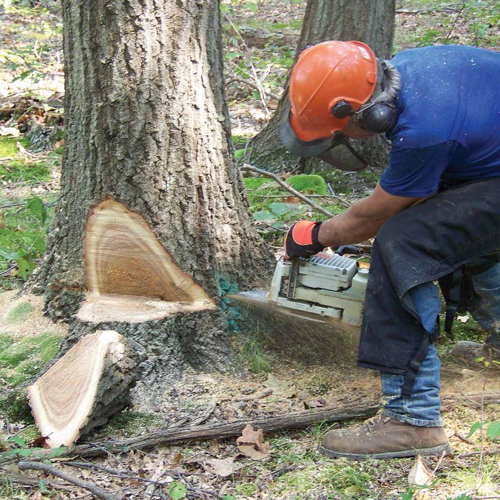 Talar un árbol