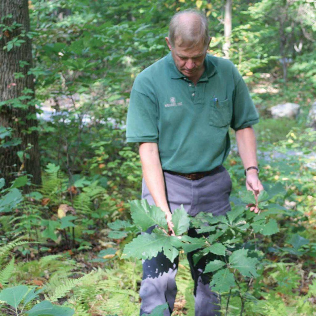 Forest regeneration